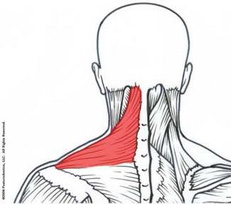upper trapezius  core balance therapy